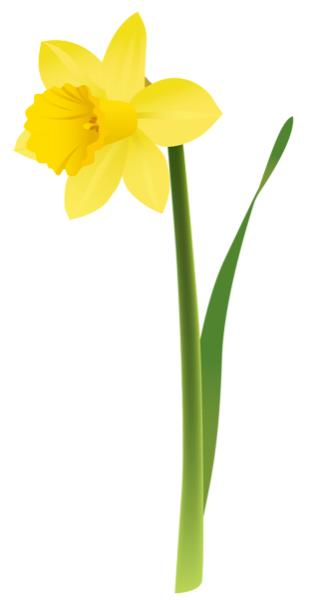 spring_yellow_daffodil_png_clipart.png